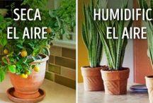 plantas microclima
