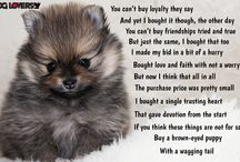 Dog-Lovers Cute / Cute dog pictures and stories to melt your heart.