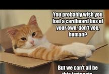 Cats Funnies