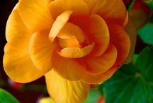 kwiay