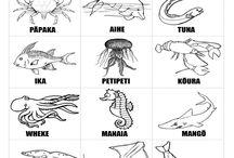 Teaching - Te Reo Māori