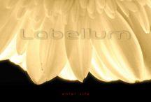 Labellum - Flowers by Labellum / a flower arrangements designed by Labellum. comtemporary flower design