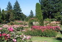 Places to visit in and around Portland, OR / by Debra Trautman