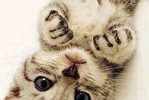 Kediler / Cat