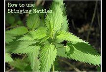 Herbal focus