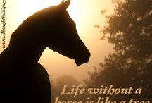Horse crazy / Love