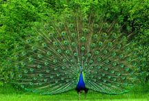 Birds / Our elegant feathered friends