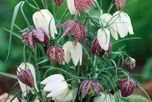 native british plants