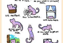 My crazy cat life