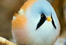 madár az ász