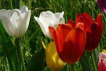 Rady nejen do zahrady / Zahrada, zvířata, recepty, rady