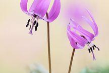 Garden   Flowers / by shouta horie