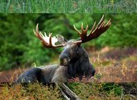 Wildlife | CANADA / All about wildlife watching and experiences in Canada. Obviously. :)