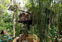 Treehouse / De Treehouse: een adembenemende, ongewone en betoverende ervaring want wonen in de bomen, wie wil dat nou niet? Te vinden in alle soorten en maten.