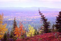 Autumn Colours in Ruka-Kuusamo / Nature in Ruka-Kuusamo area is full of colours in mid September!