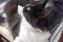 Kitties / Kittens and fluff