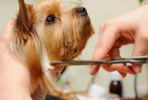 Dog grooming*