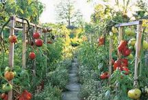 Strawbale Garden