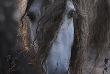 0 Horse