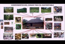 Agro-Ecology