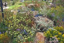 Z Australian Native gardens / by Angela Needham