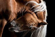 EQUINE ART / Horse PHOTOS
