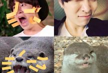 ♡Youngjae der Otter♡ / This was originally only made to show the similarity between Youngjae and otters.. well..