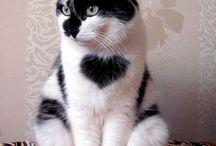 γατάκια