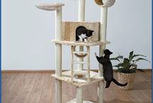 cats_house