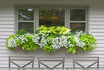 Potato vine planters