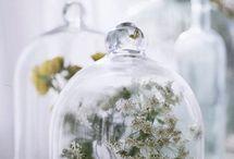 Mariage terrarium