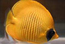 red sea / colurful fish