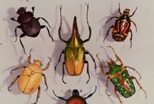 Insects / by Elizabeth Hager