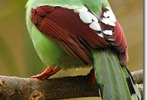 Pássaros / by Maria Jose Monteiro
