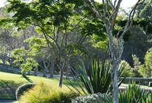 a native garden