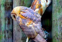 Wildlife-Nature / feather,creature,animals