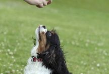 Dog training hints