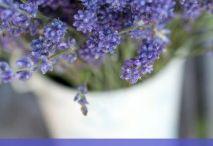 garden tips n ideas