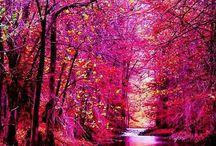 wonder nature