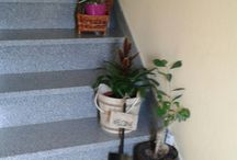 as minhas plantinhas