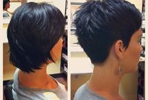 Shorthair and Colour