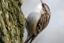 vogels / tuinvogels en roof vogels