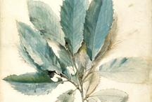 John Ruskin / Works by the artist and patron John Ruskin