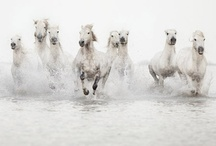 All the beautiful horses / I love animals and they are also very inspirational in Home decoration