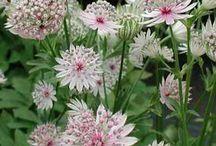Blommor Gråda