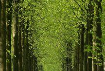 Trees / Trees