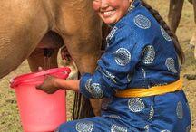 Horse Cultures