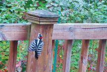 Back Yard Birds