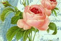Kort blommor