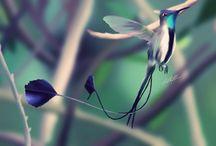 aves y flores / variedad de aves y flores